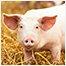 Svin, kvæg og landbrugsprodukter fra Polysan i polymerbeton
